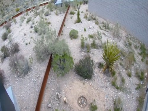 Desert Tortoise, Red Rock Canyon Area live cam