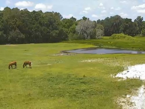 Horse Teaching Unit, Gainesville live cam