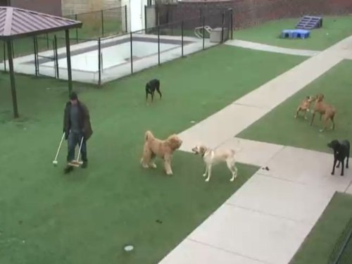 Doggy Daycare Splash Zone, Chanhassen live cam