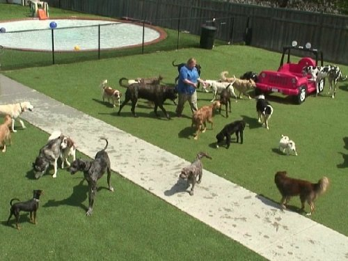 Doggy Daycare Barkyard, Chanhassen live cam